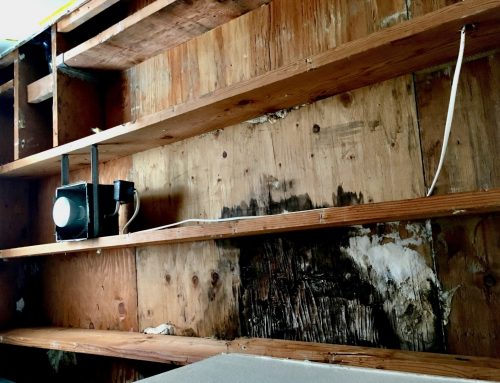 What Are The Signs Black Mold & How To Remove It?