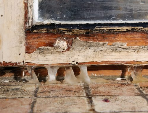 Can You Paint Over Mold?